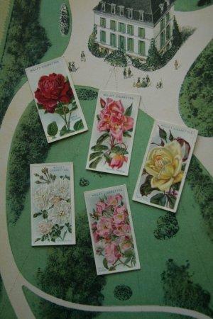 画像1: 再入荷 cigarettes card/シガレットカード【ROSES Second Series of 50】 1914