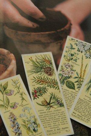 画像1: tea card/ティーカード【Wild Flowers in Their Families 2nd Series】